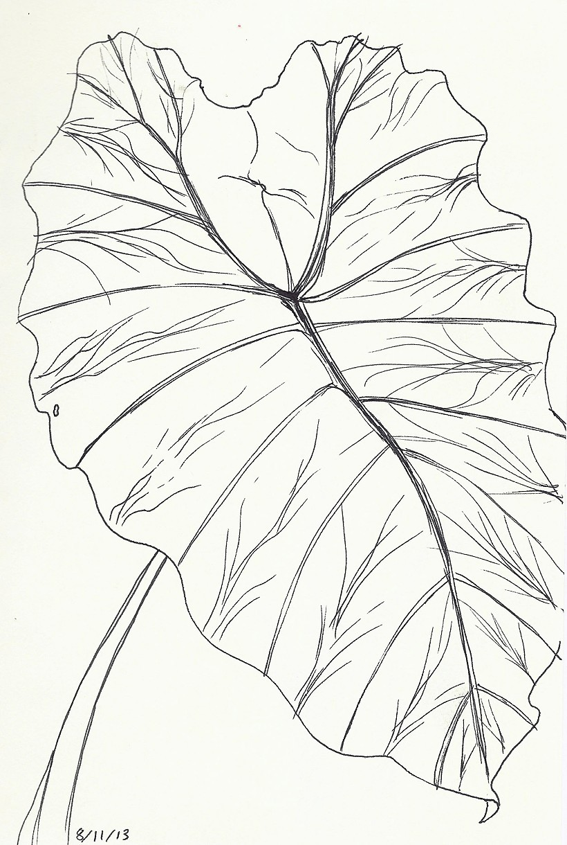 Elephant ears drawing at getdrawings free for personal use 820x1220 chelsea clarke ccuart Images