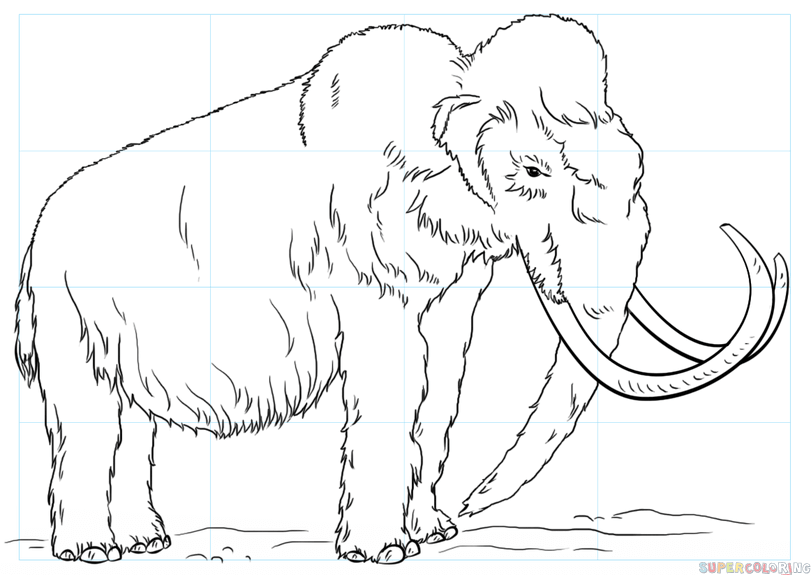 811x575 How To Draw A Woolly Mammoth Step By Step Drawing Tutorials