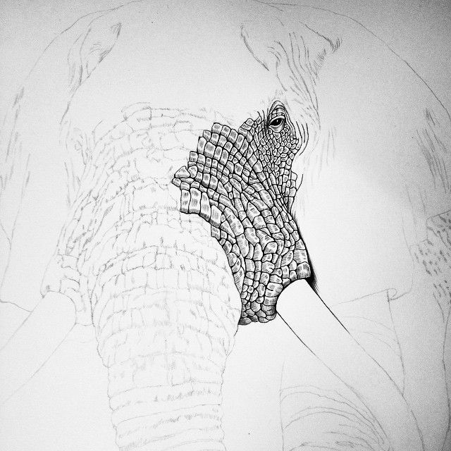 Elephant Eyes Drawing