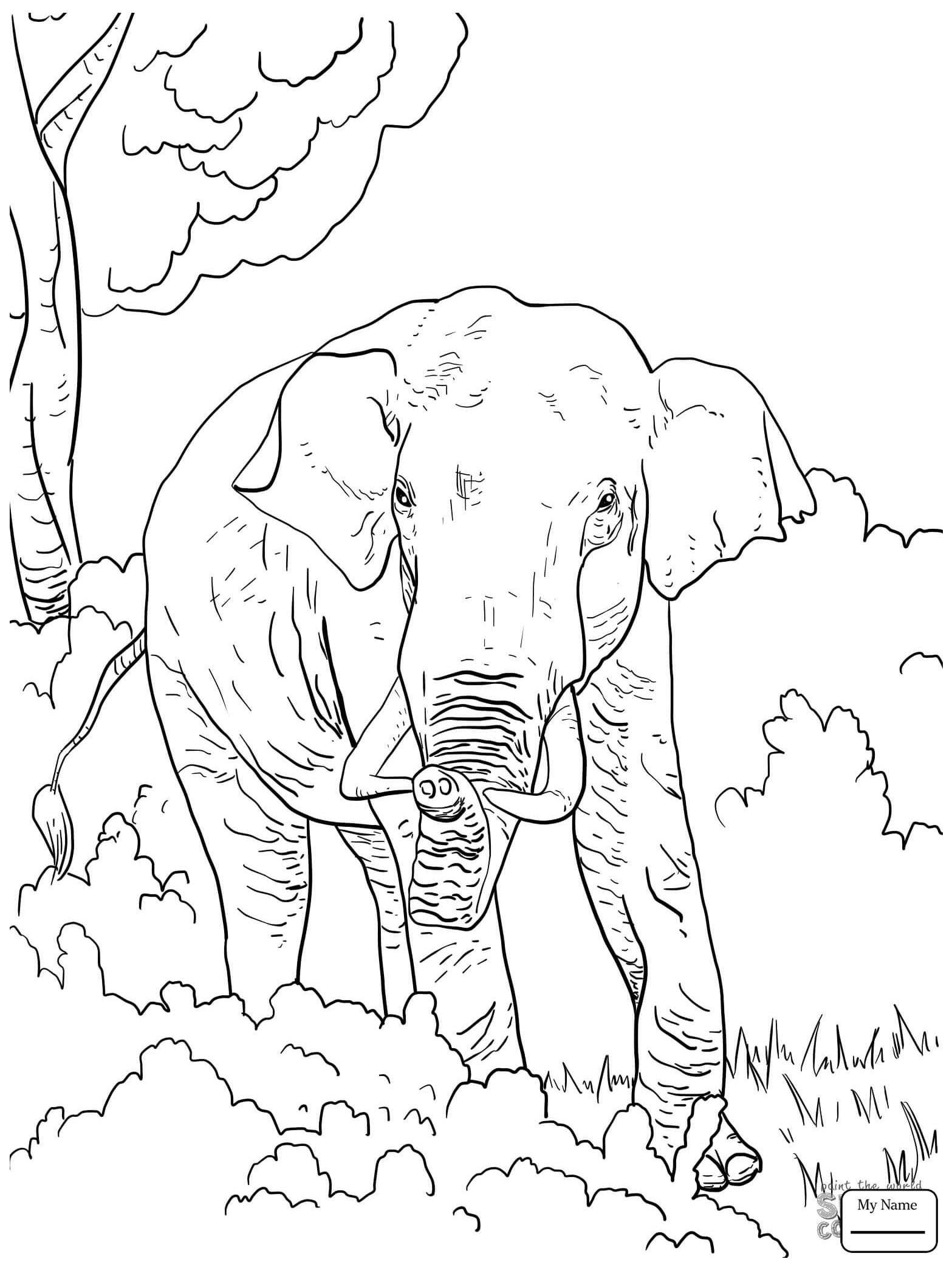 Elephant Family Drawing at GetDrawings Free for
