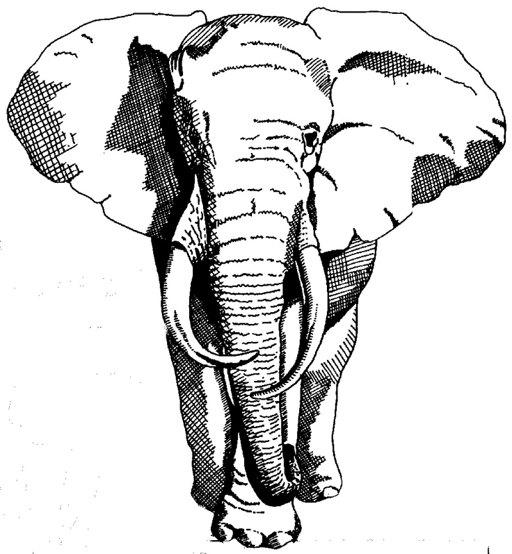 Elephant Front View Drawing