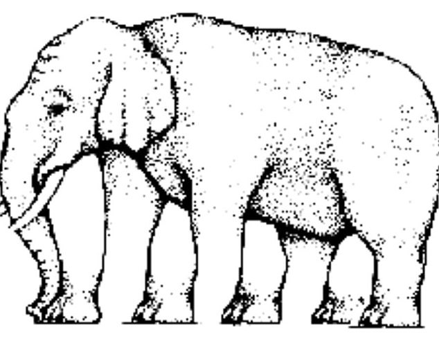 Line Drawings Of African Animals : Elephant front view drawing at getdrawings.com free for personal