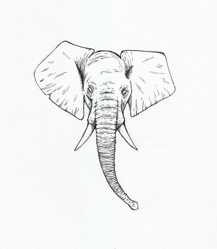 Elephant Head Drawing