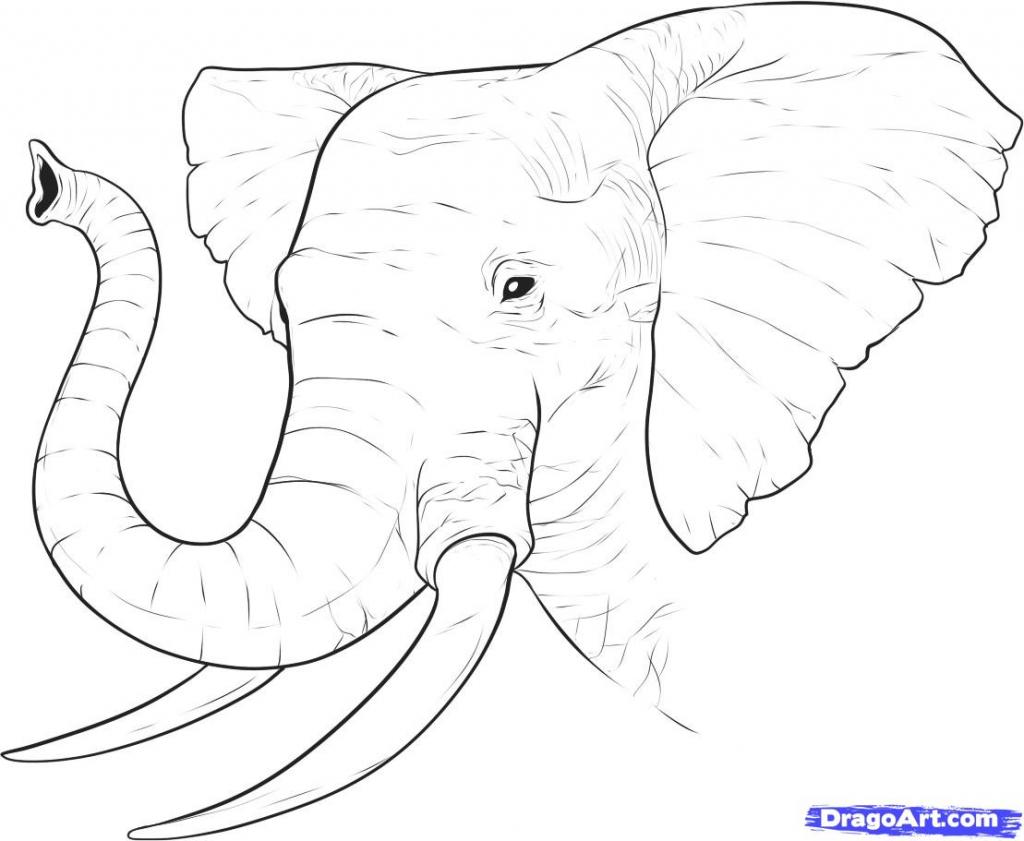 1024x841 Elephant Face Drawing Draw Elephant Face