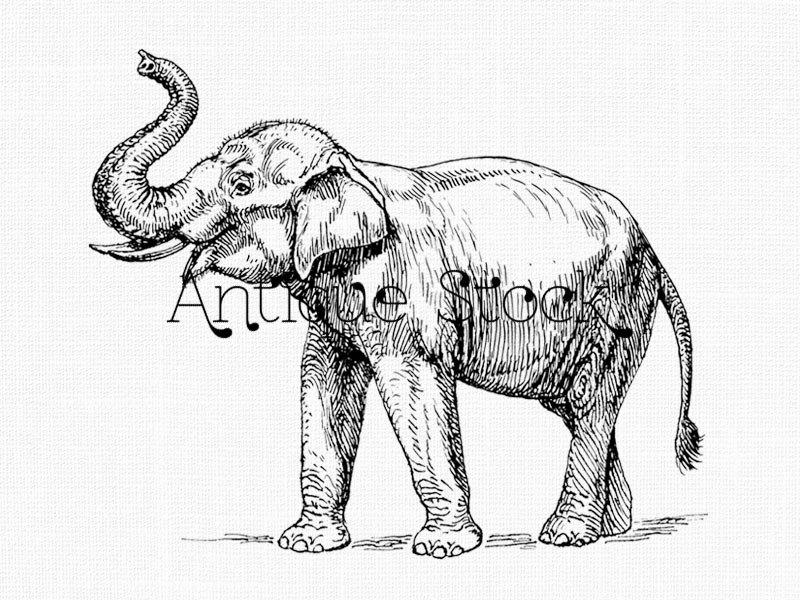 800x600 Elephant Line Drawing Indian Elephant Printable Image