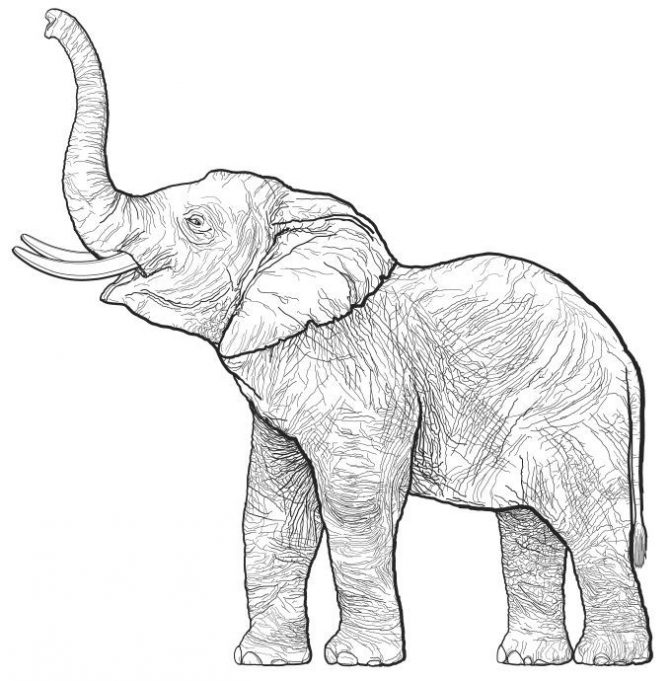 671x681 Coloring Pages Elephant Drawing Image Draw Coloring Pages