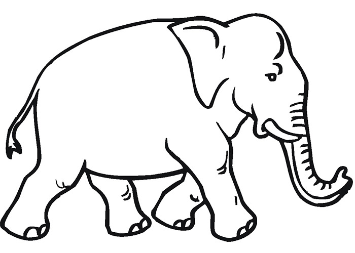 Elephant Outline Drawing At GetDrawings.com | Free For Personal Use Elephant Outline Drawing Of ...