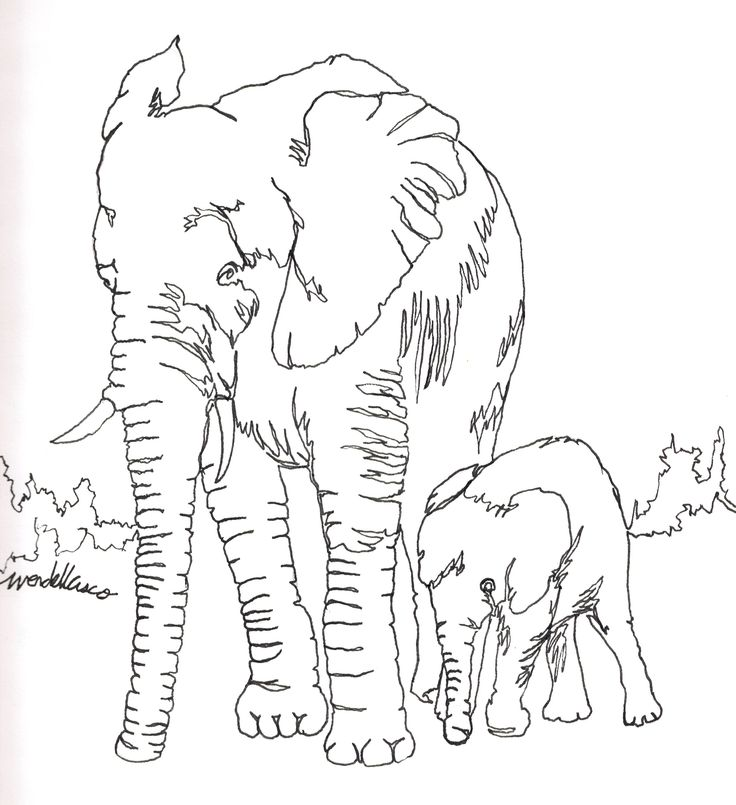 Elephant Pen Drawing