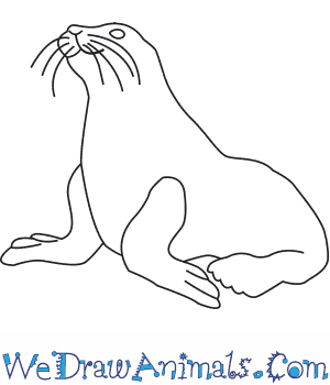 300x350 How To Draw A Steller Sea Lion