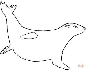 300x242 Drawings Of Seals Coloring Pages
