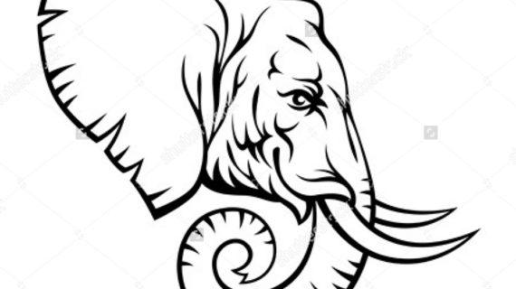 570x320 Elephant Head Drawing Elephant Head Side View Stock Photos Image