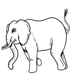 286x310 Image Result For Elephant Side View Drawing Elephant