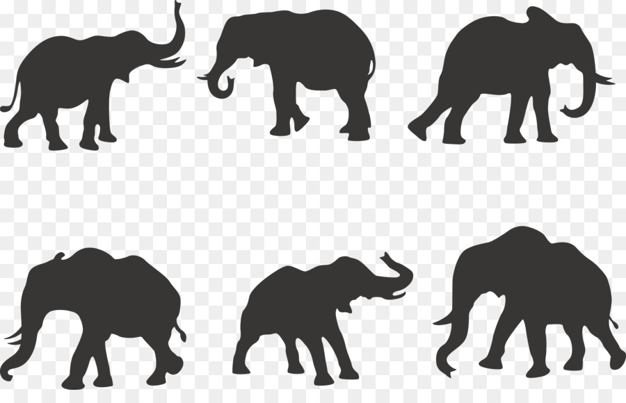 900x580 African elephant Silhouette Indian elephant