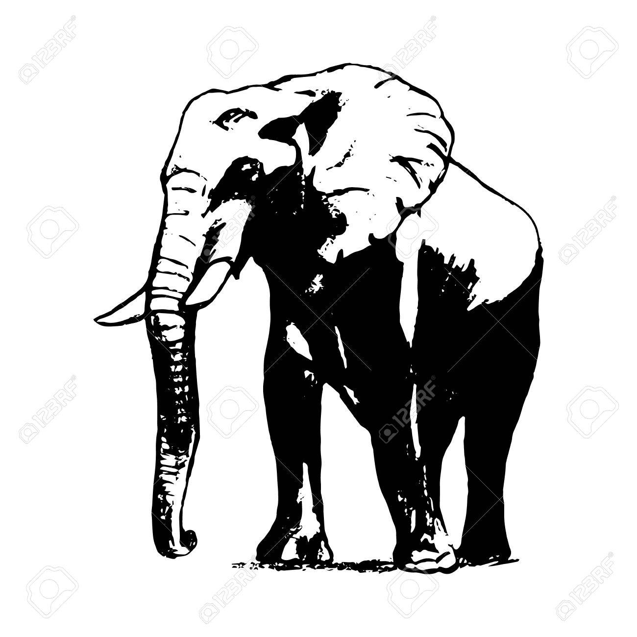 1300x1300 Graphic Image Of An Elephant On A White Background. The Freehand