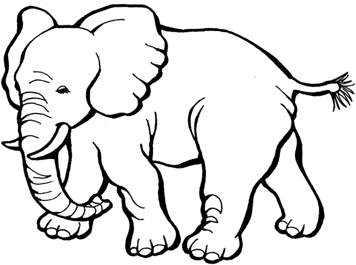 700x520 Coloring Pages. Elephant Color Page