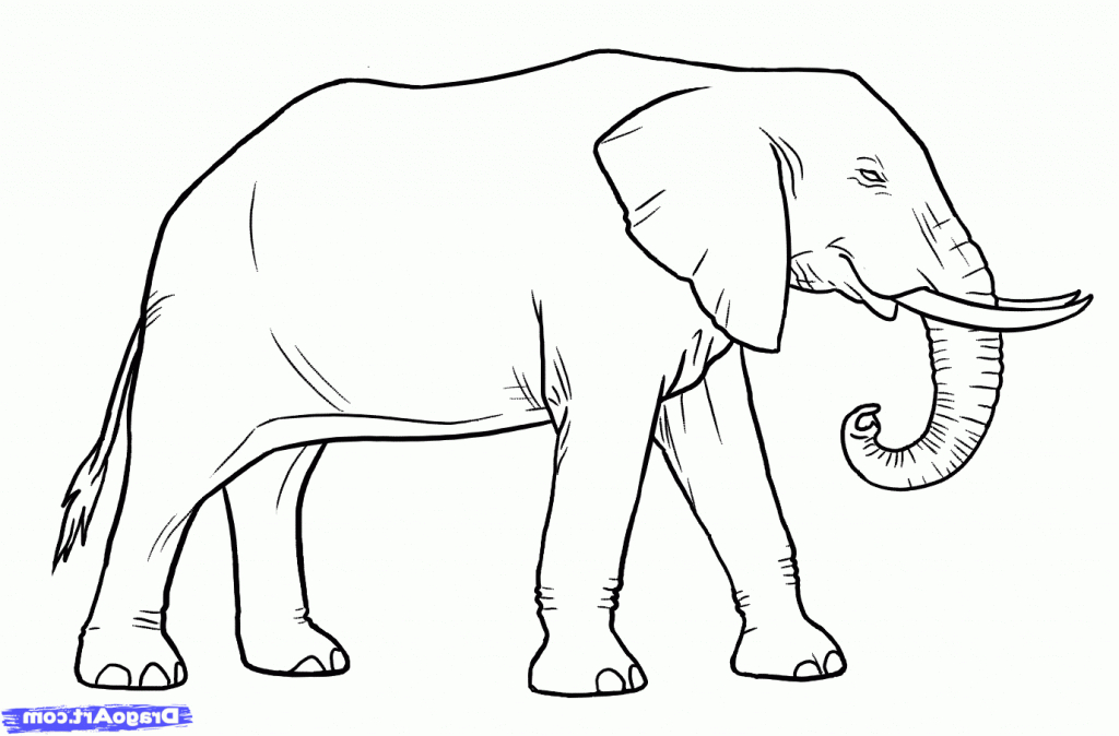 1024x674 Simple Line Drawing Of Elephant