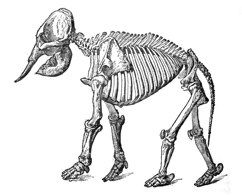 778x626 Random Animal Skeleton Dump