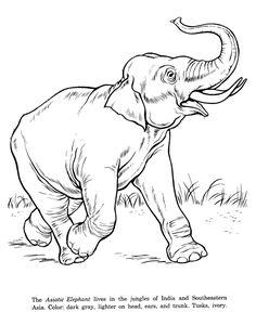 236x288 Indian elephant Indian Elephant Elephants Indian