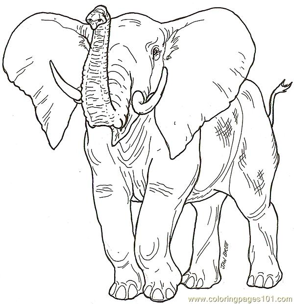 ... Gallery Elephant Head Trunk Up. 600x621 Babaelephant2 Coloring Page