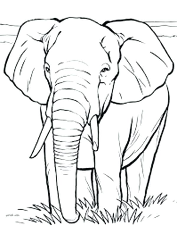 Elephants Drawing