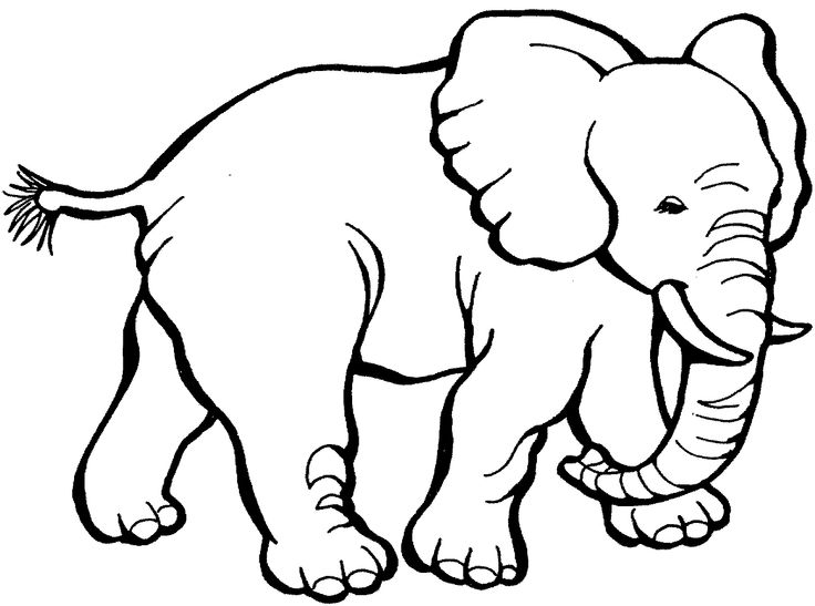 Elephants Step By Step Drawing