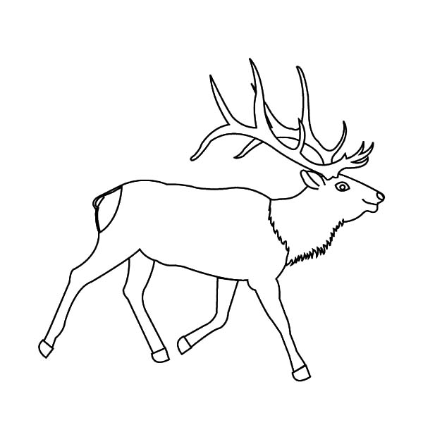 600x603 Awesome Elk Antlers Coloring Pages Awesome Elk Antlers Coloring
