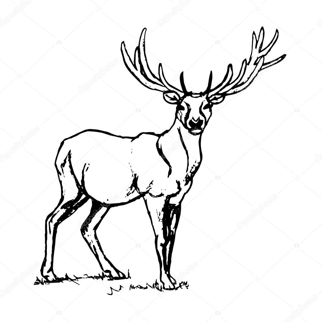 1024x1024 Deer with big horns. — Stock Vector © Mila Endo