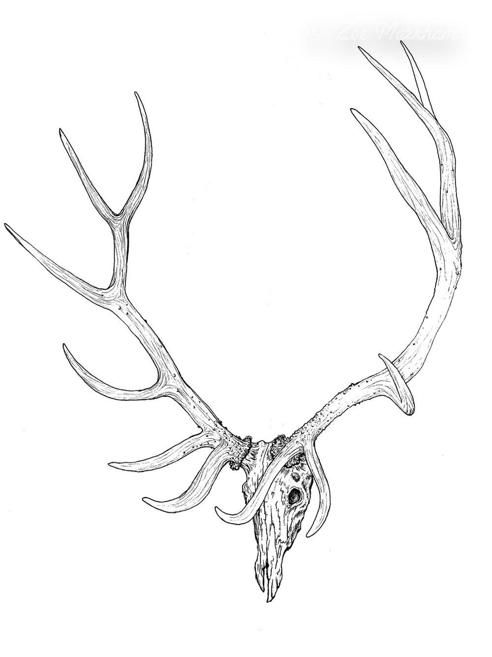 1000x1334 Drawings — Slightly Savage Arts