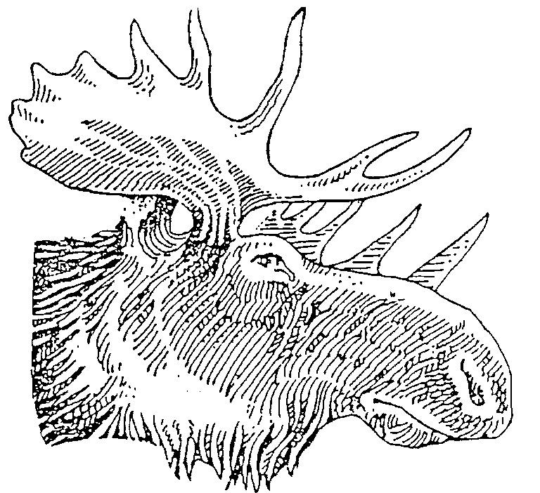 768x702 Drawn moose moose antler