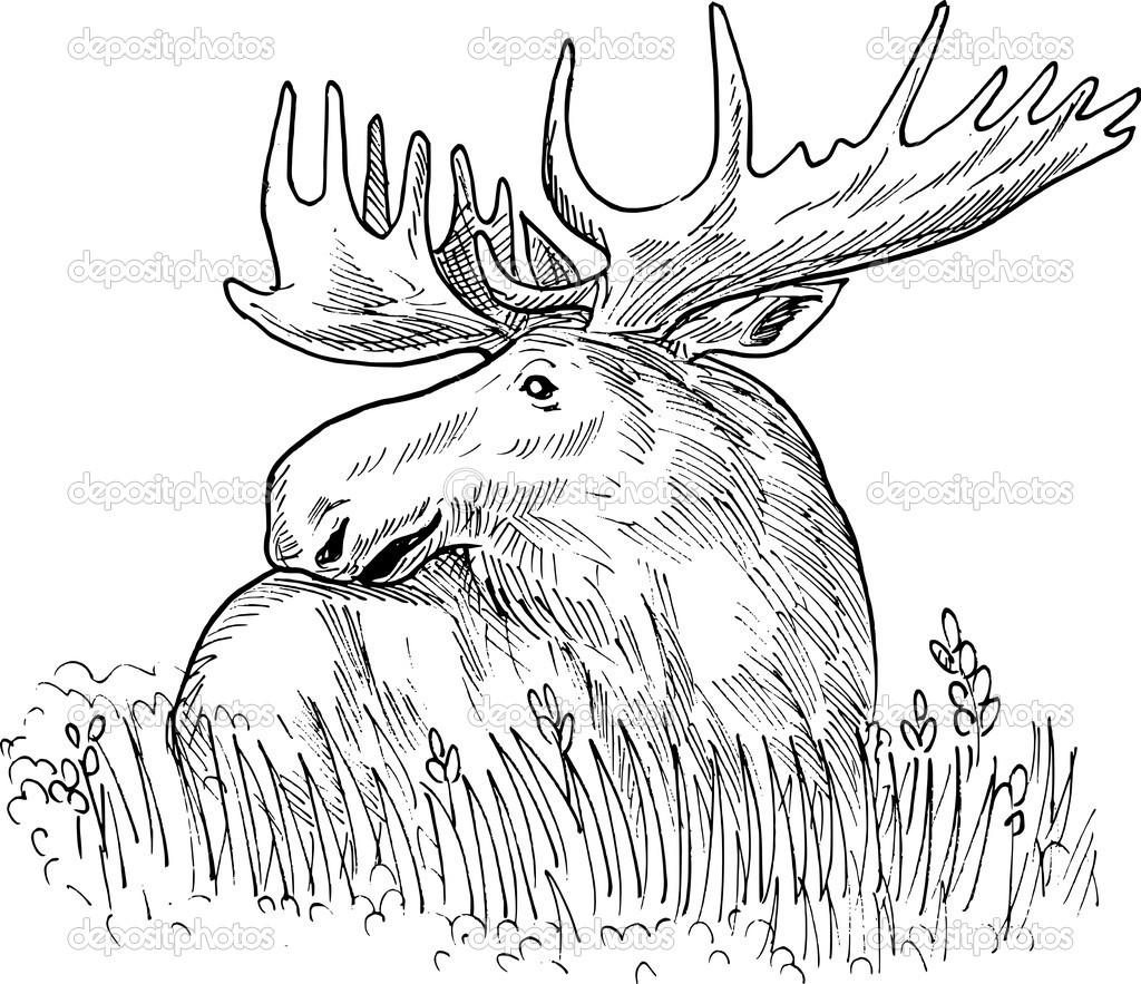 1024x883 Moose Antler Coloring Or Mon European Elk Drawing Patrimonio