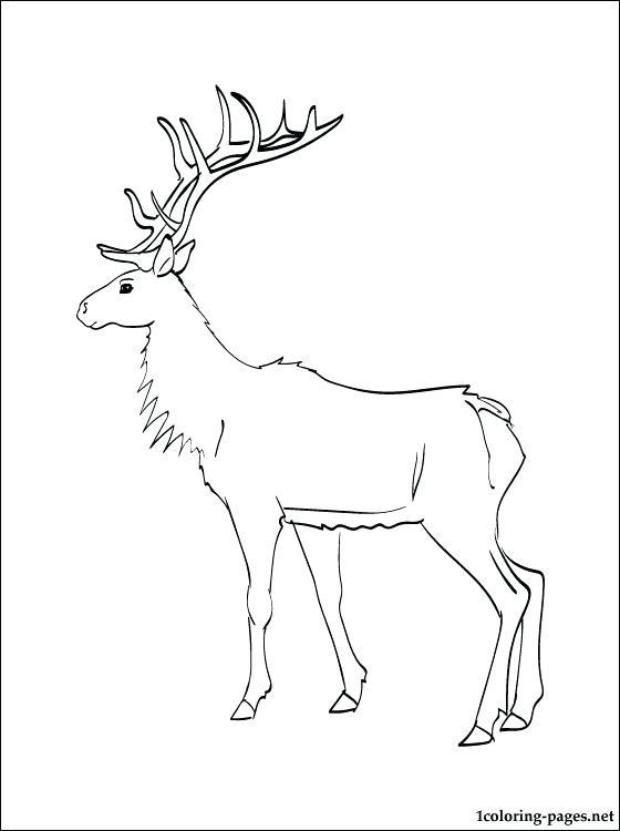 560x750 Elk Pictures To Color Elk Sculpture Color Me Gone 6 Elk Hunting
