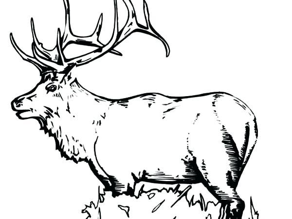 600x451 Elk Coloring Page Elk Coloring Pages For Kids Elk Coloring Pages