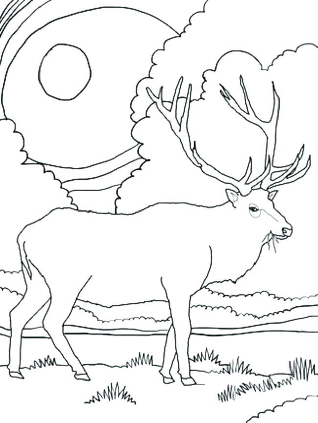650x865 Elk Coloring Page Elk Coloring Page Elk Head Coloring Page Svago
