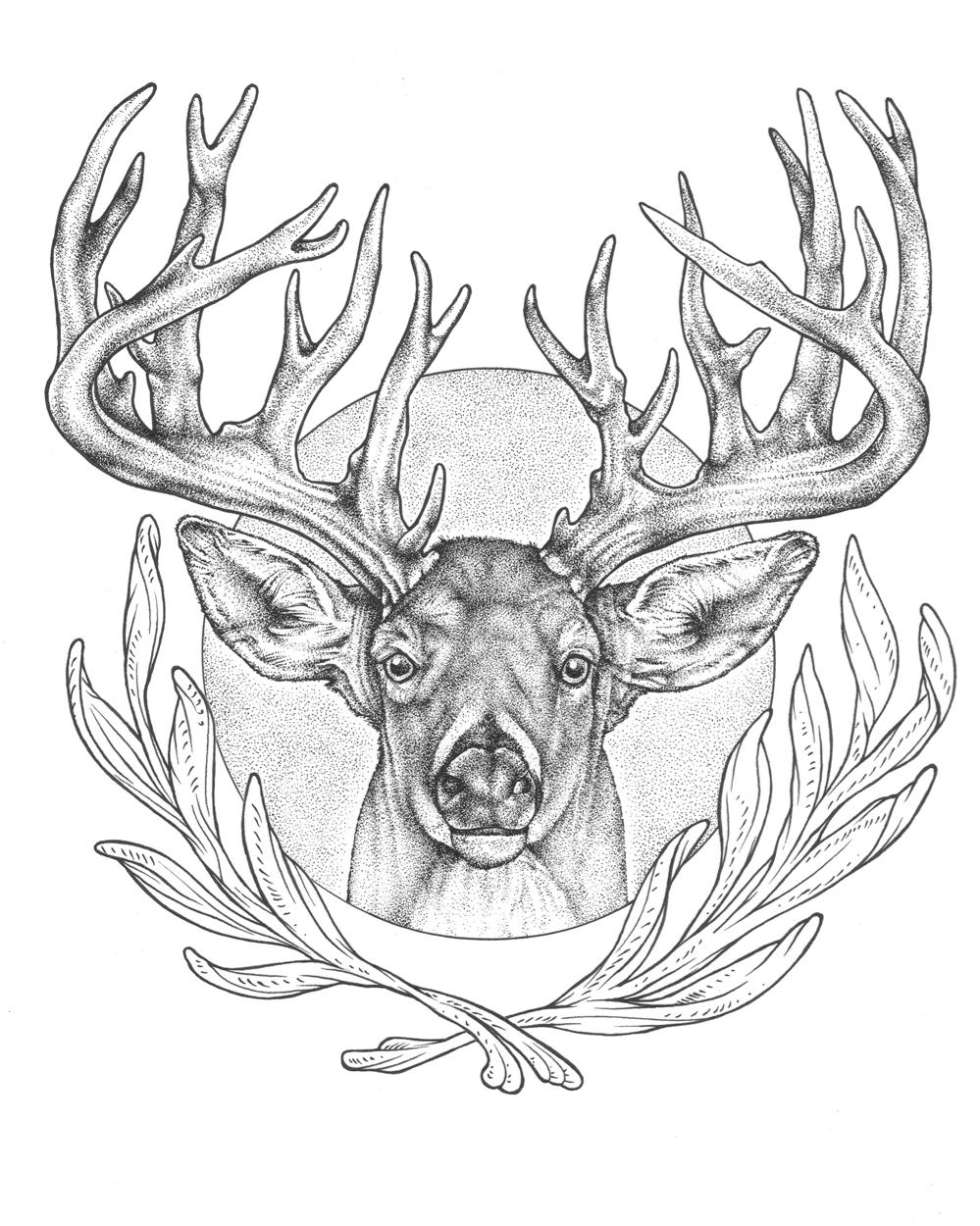 Elk Head Drawing at GetDrawings.com | Free for personal use Elk Head ...