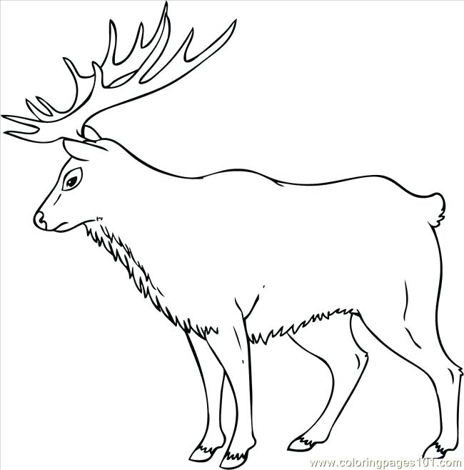 650x658 Elk Coloring Page How To Draw An Elk Step 7 Coloring Page Elk