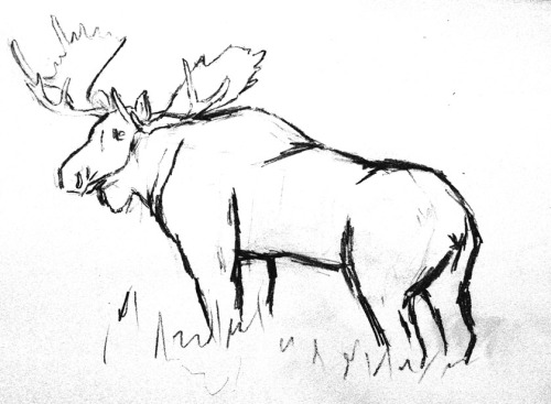500x367 Pin By Marriah Curl On Sketches Moose, Oil And Sketches