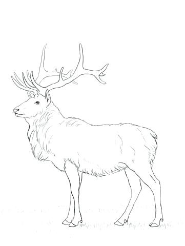 361x480 Elk Coloring Page Mouse Coloring Page Elk Coloring Pages Printable