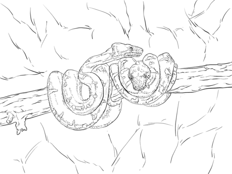480x360 Emerald Tree Boa Coloring Page Free Printable Coloring Pages