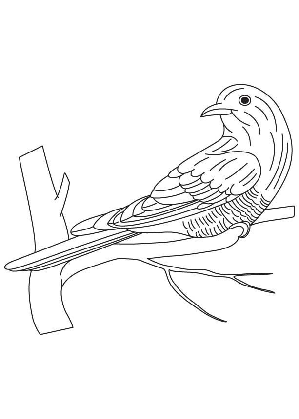 613x860 Asian Emerald Cuckoo Coloring Page Download Free Asian Emerald