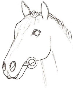 250x301 How To Draw A Horse Head