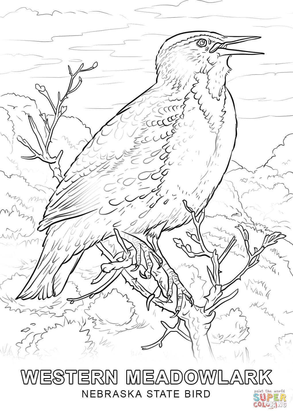 1020x1440 Nebraska State Bird Coloring Page Free Printable Coloring Pages