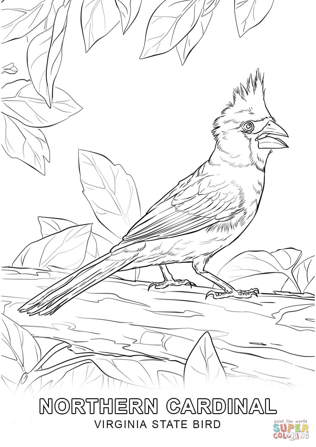 1020x1440 Virginia State Bird Coloring Page Free Printable Coloring Pages