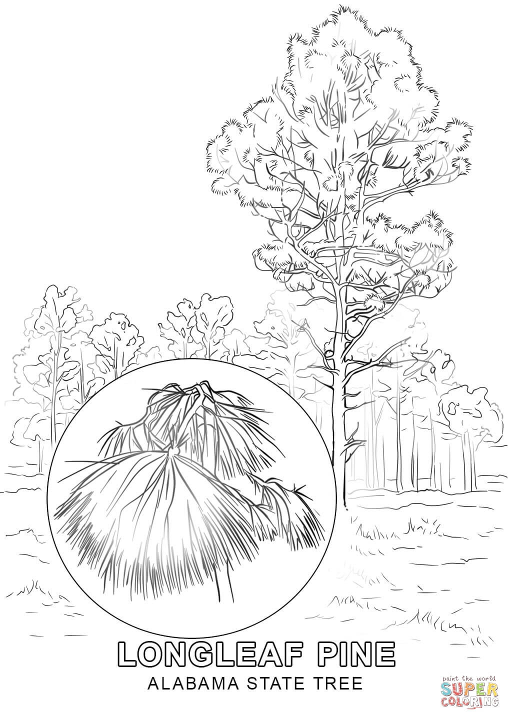 1020x1440 Alabama State Tree Coloring Page Free Printable Coloring Pages
