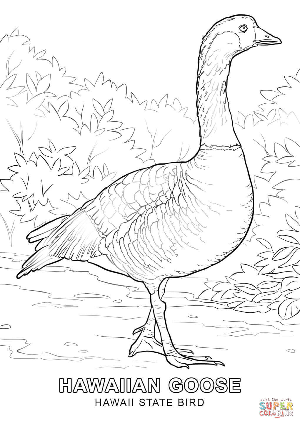1020x1440 Hawaii State Bird Coloring Page Free Printable Coloring Pages