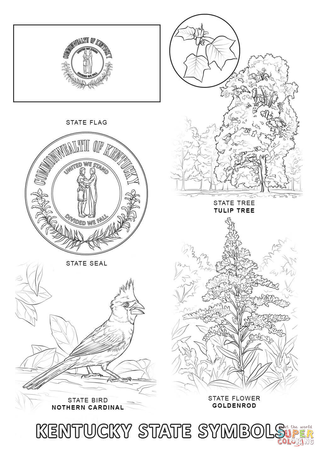 1020x1440 Kentucky State Symbols Coloring Page Free Printable Pages