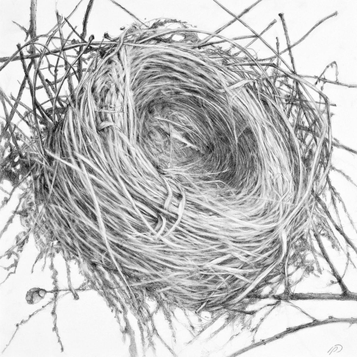 1200x1200 Drawing Empty Nest