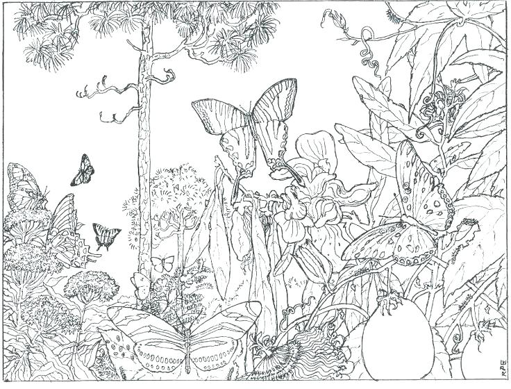 Enchanted Drawing at GetDrawings.com | Free for personal use ...