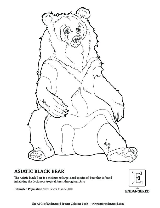 612x792 Endangered Species Coloring Pages Black Bear Free Endangered