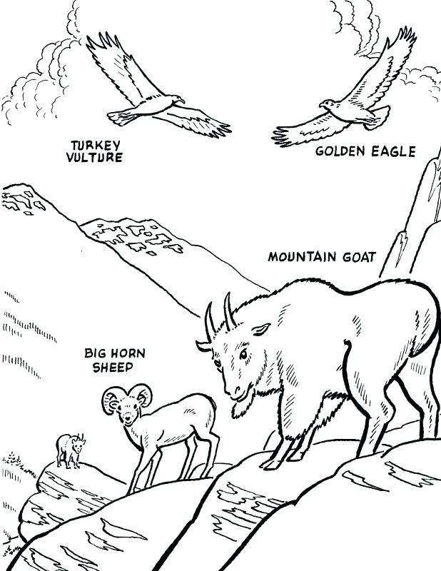 618x800 Endangered Species Coloring Pages Endangered Animals Math Coloring