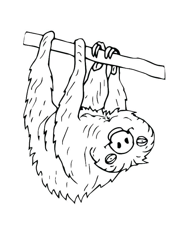600x800 New Sloth Coloring Page Best Of Endangered Species Pages Hanging